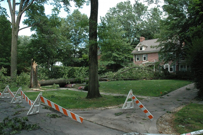 Tree down in Shaker Heights