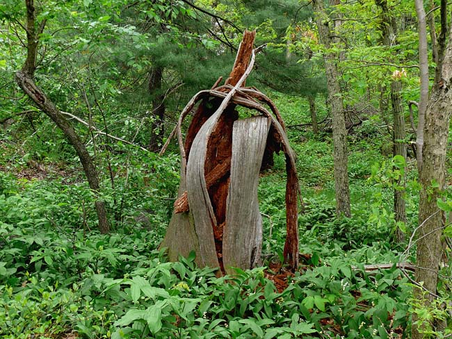 decomposed bree trunk as sculpture in the woods
