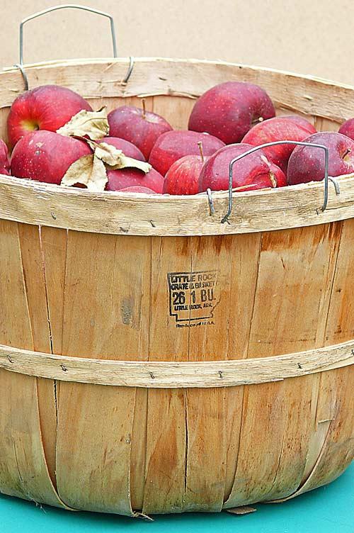wood arkansas bushel apple basket with seneca indian apples image 11.02.09 jeff buster