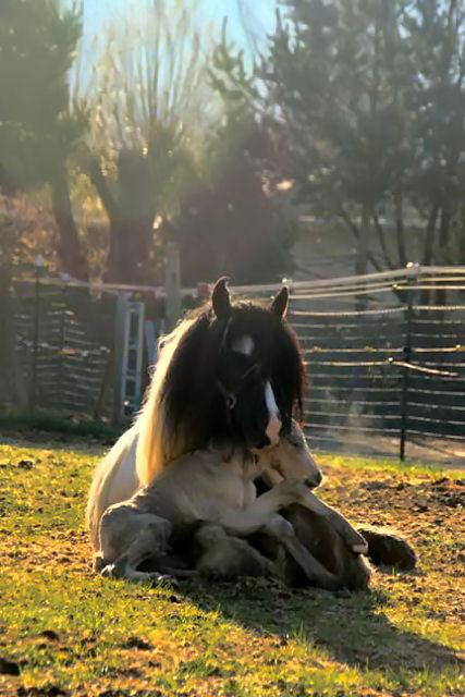 100301_baby-horse-1.jpg