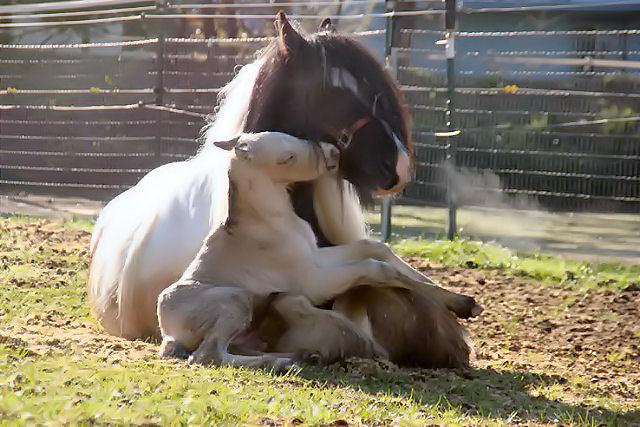 100301_baby-horse-3.jpg