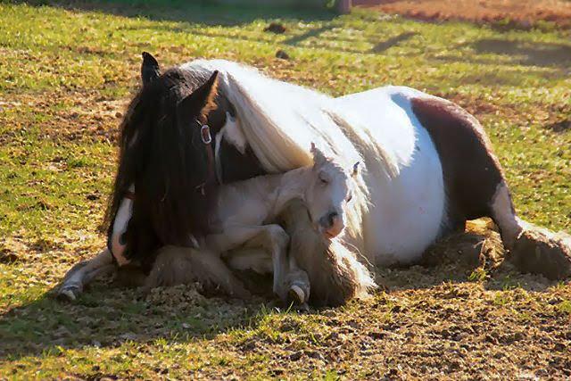 100301_baby-horse-5.jpg