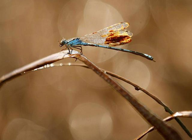 100521_dragonfly.jpg