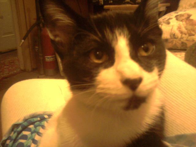 Angelina's Kitten...