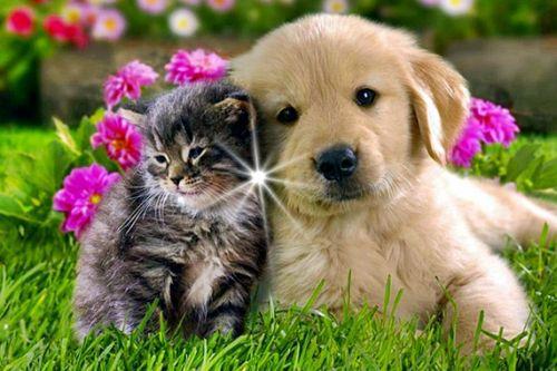 CatsDogs.jpg