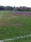 """""""grass"""" in Clark Field"""