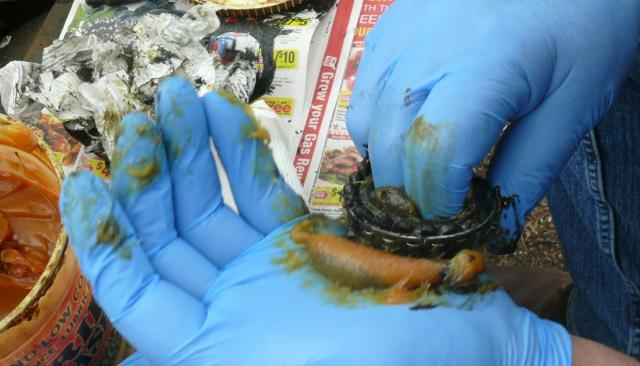 Wheel bearing grease re-packing by Charlie - every car has 8