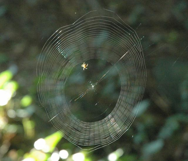 GreenSpiderweb650.JPG