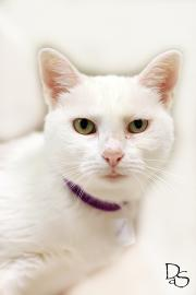 Hill Billy needs a new home - FREE TODAY AT APL