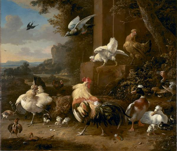 Melchoir d Hondecoeter Poultry Yard, National Gallery of Victoria, Australia