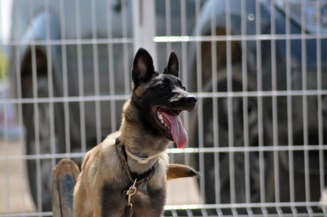 SECRET_SERVICE_GREAT_DOGS.jpg