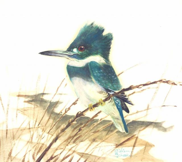 Kingfisher - William E. Scheele