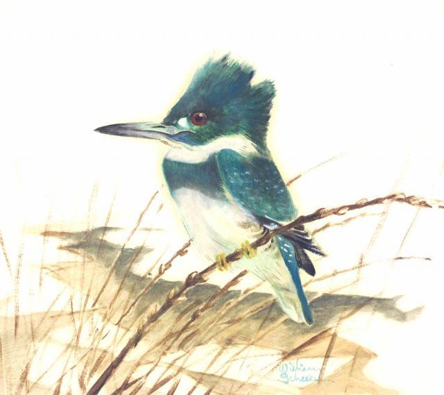 Kingfisher - William E. Scheele