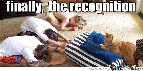 cat-dogsupremacy_o_593561.jpg