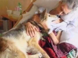 dog-reunion-4-270x200.jpg