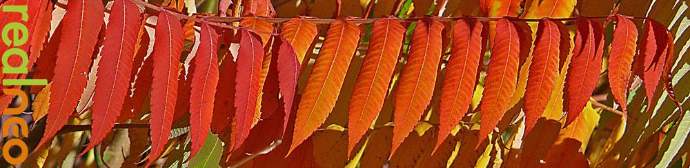 fall red orange