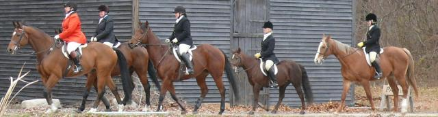 fox chase - horse and rider and hounds - no fox actually