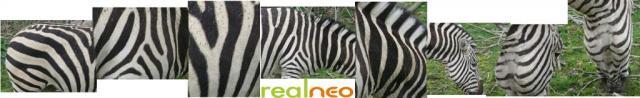 Zebra stripes Metroparks Cleveland