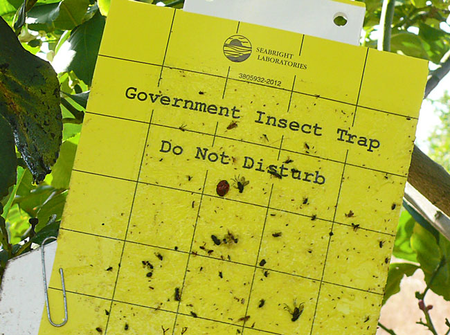 מדבקות צהובות למזיקים בגידולים חקלאיים הדברה אורגנית