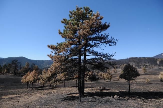 Fourmile Canyon Wildfire, West of Boulder, Colorado, September 2010