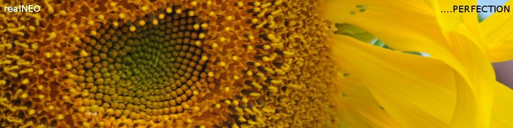 realNEO Sunflower Header 2010