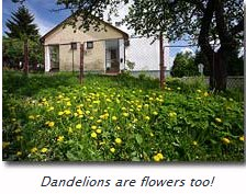 Dandylions are flowers too!!!