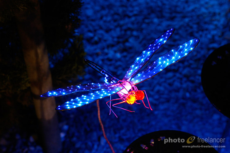 Close up of LED dragonfly